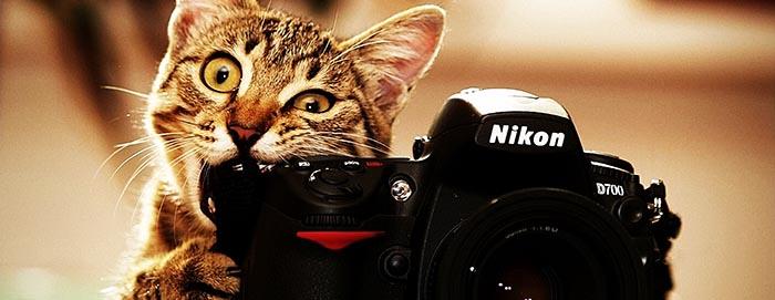 кот грызет фотоаппарат: сценарий пижамной вечеринки